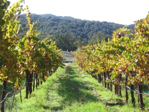 <i>What an organic vineyard looks like in the winter. Photo courtesy of Tablas Creek </i>